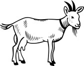 168x131 Goat Clipart White Background