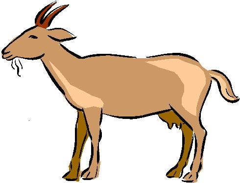 490x374 Goats Clipart
