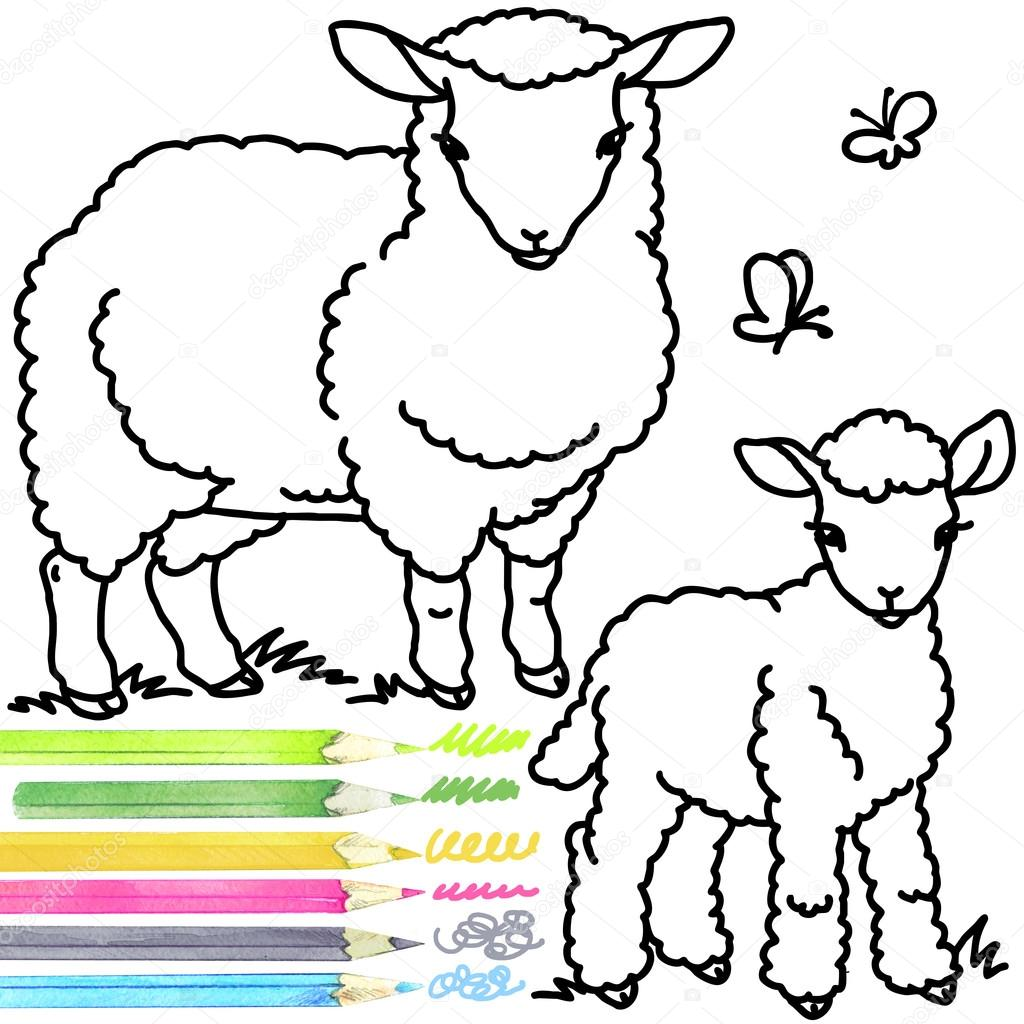 1024x1024 Sheep And Lamb. Coloring Book Sheep. Sheep Outline Drawing. Sheep