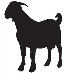 250x250 Boer Goat Outline Clipart Panda Free Clipart Images Goat Party
