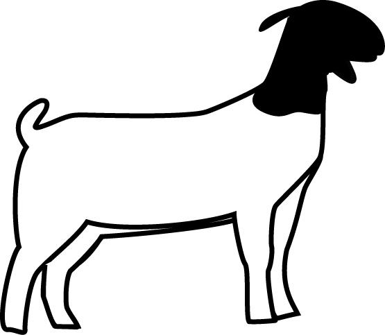 555x483 Boer Goat Outline Goat Clipart Clipart Panda