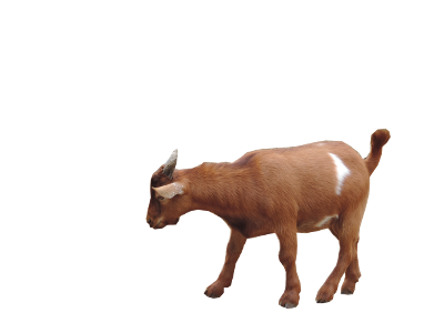 400x300 Goat Png Images Free Download, Goat Png
