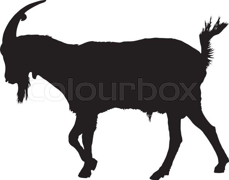 800x630 Rural Farm Animals On A White Background Stock Vector Colourbox