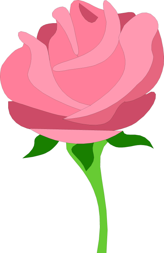 560x863 Pink Rose Clipart Pink Gold