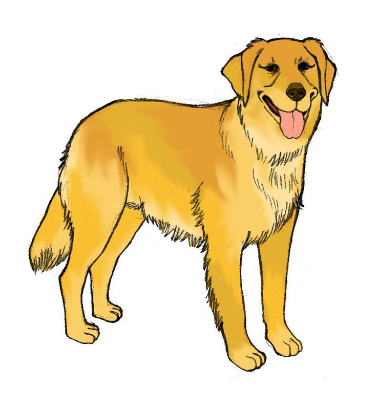 Golden Retriever Cartoon Clipart