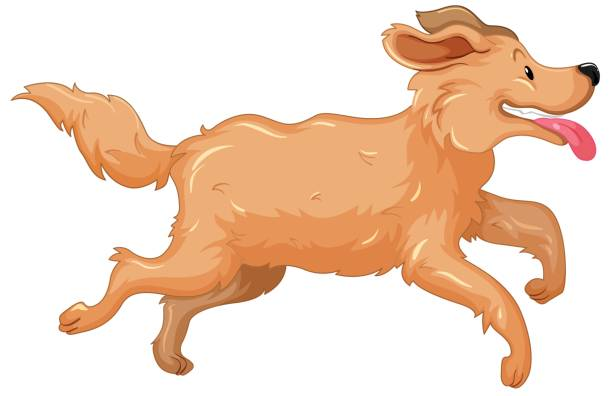 612x396 Golden Retriever Clipart Transparent