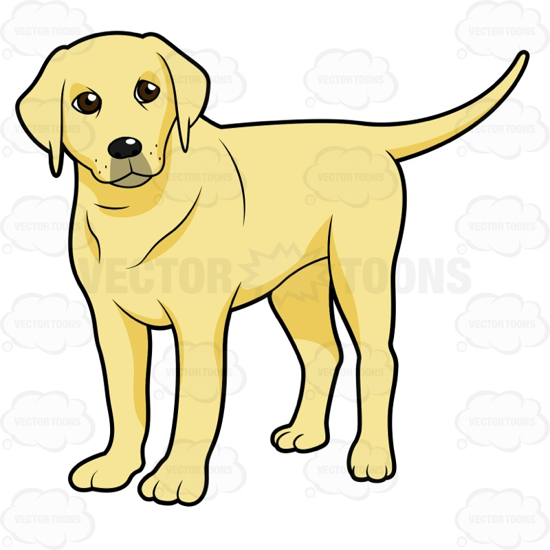 800x800 Golden Retriever Clipart Yellow Lab