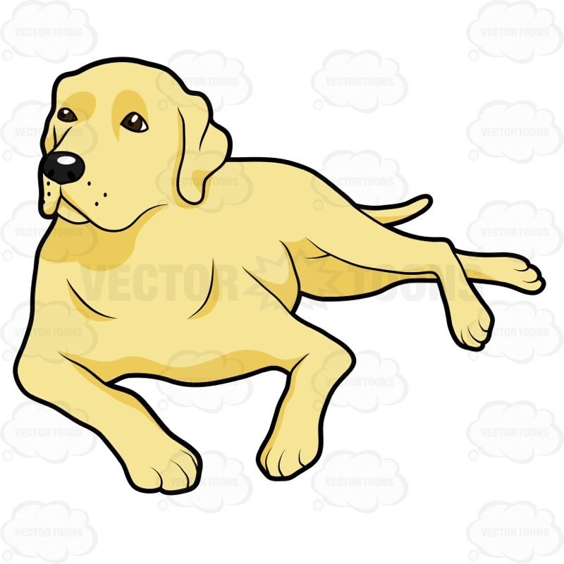 800x800 Yellow Labrador Lying Down On Its Side Cartoon Clipart