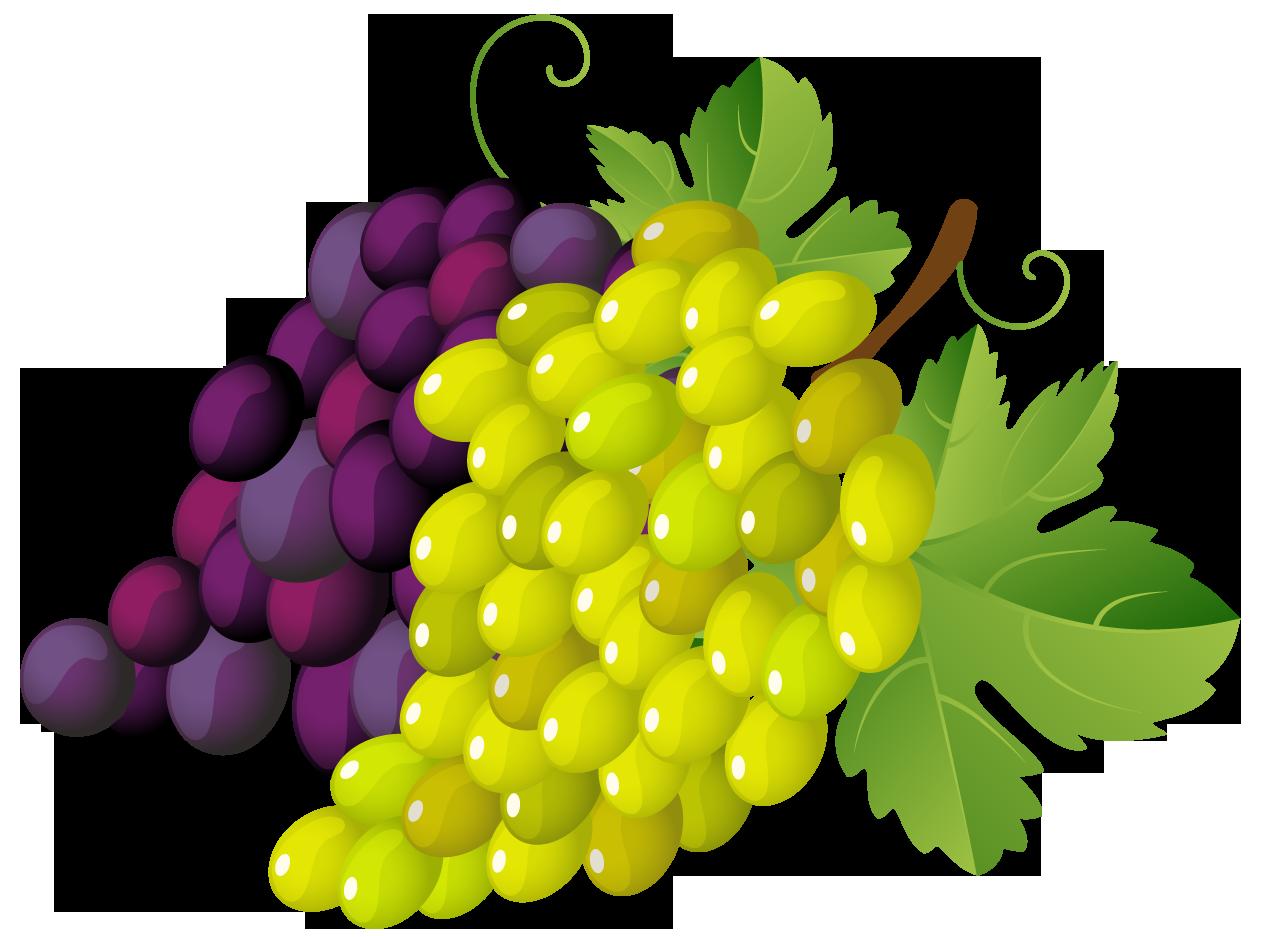 Grape Clipart