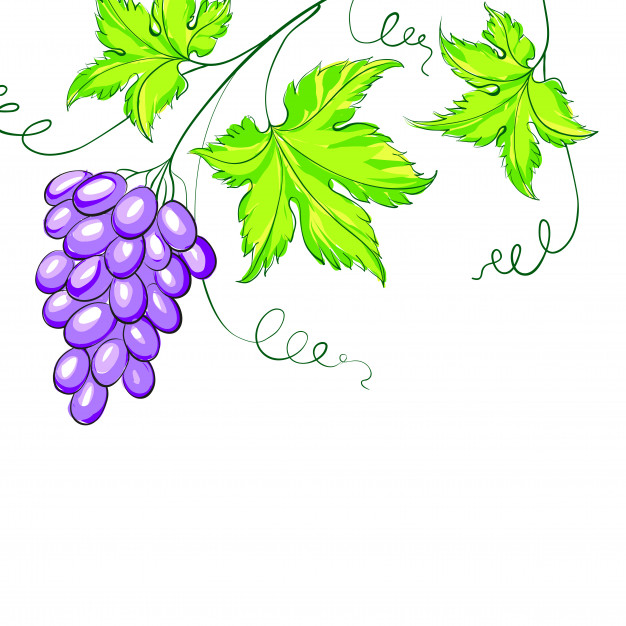 626x626 Grape Leaf Vectors, Photos And Psd Files Free Download
