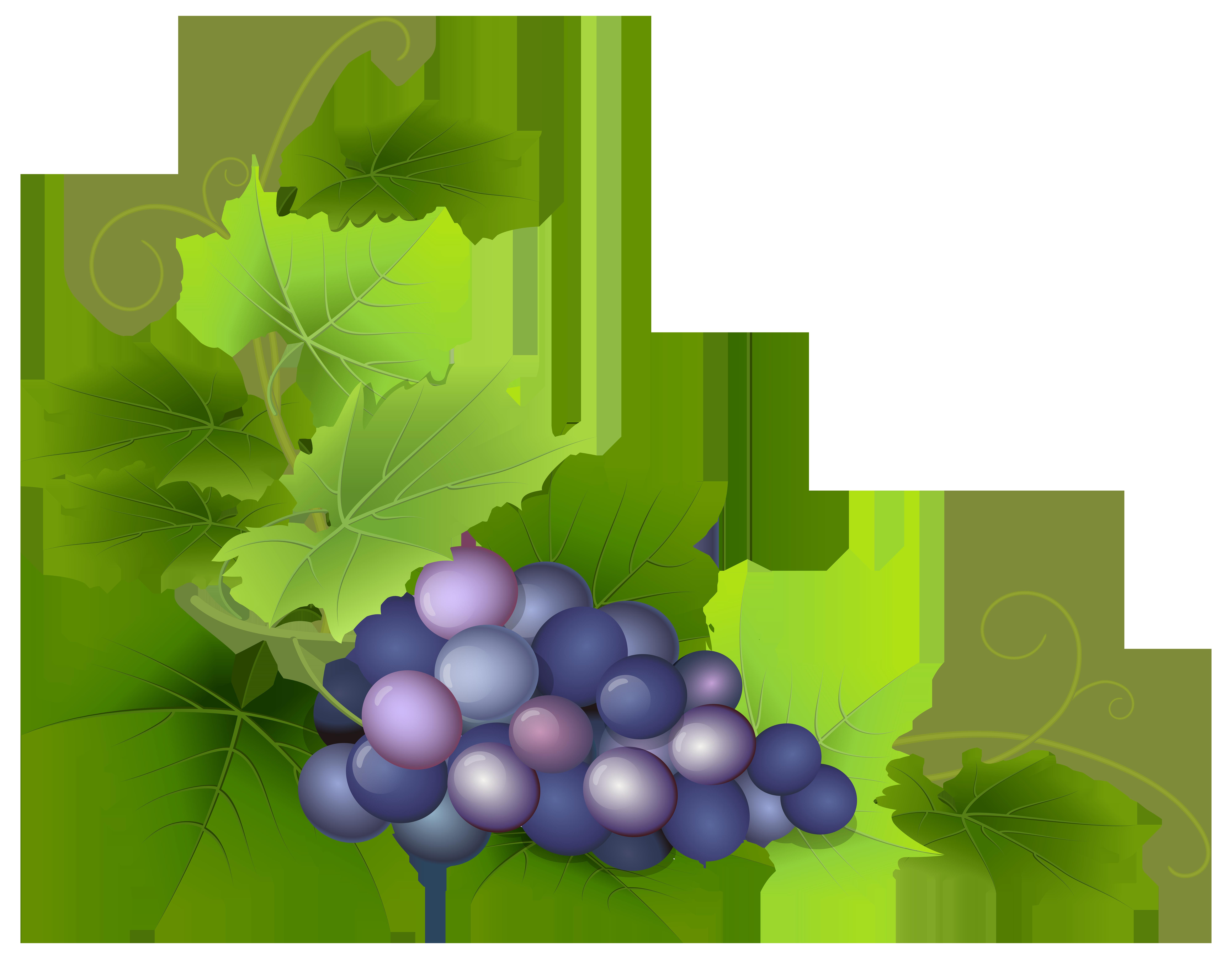 Grape Leaf Clip Art | Free download on ClipArtMag