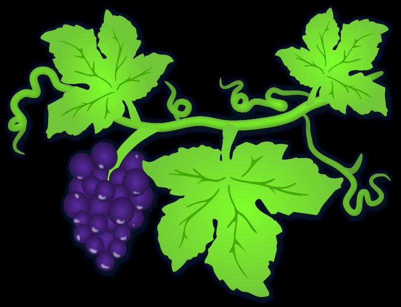 800x614 Leaf Clipart Grape Leaf