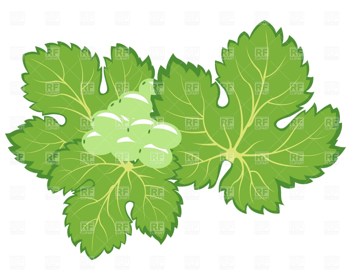 1200x960 Bunch Of Grapes With Leaves Royalty Free Vector Clip Art Image