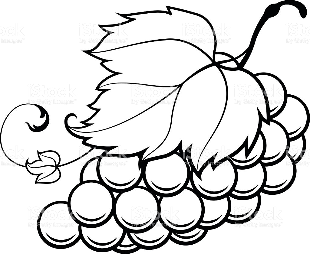 Grapes Drawing | Free download on ClipArtMag