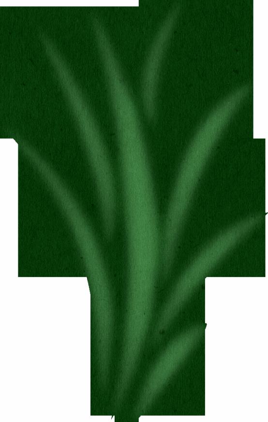 554x870 Sea Grass Clipart Grass Background