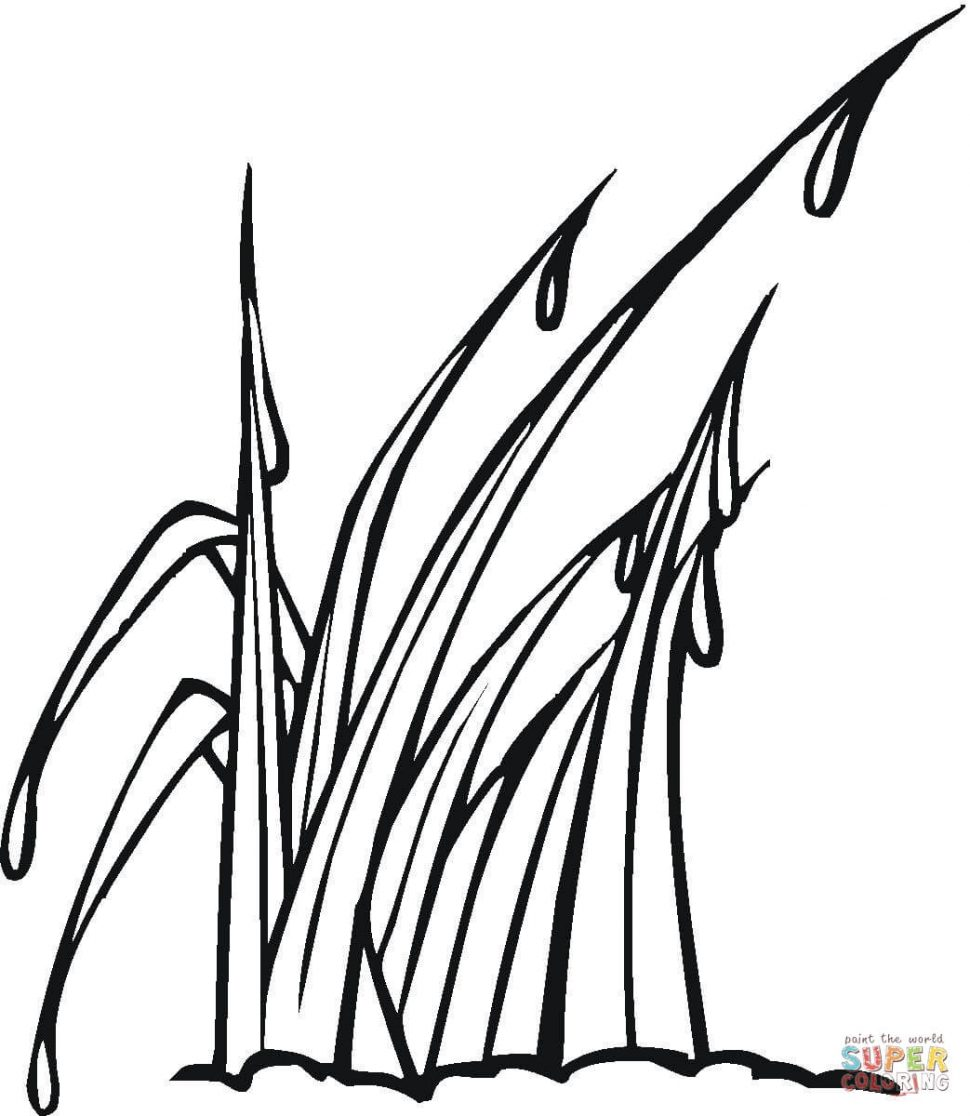 970x1116 Coloring Pages Dazzling Grass Clipart Realistic