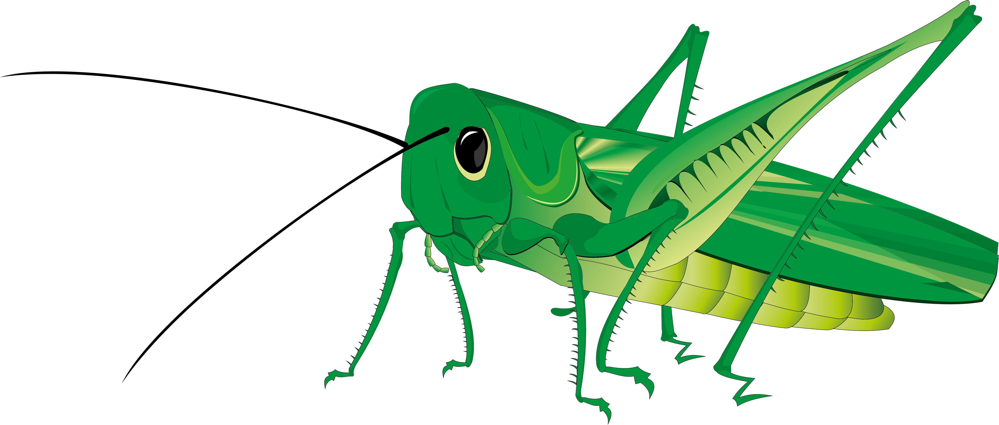 3479x1479 Grasshopper Png Images Free Download