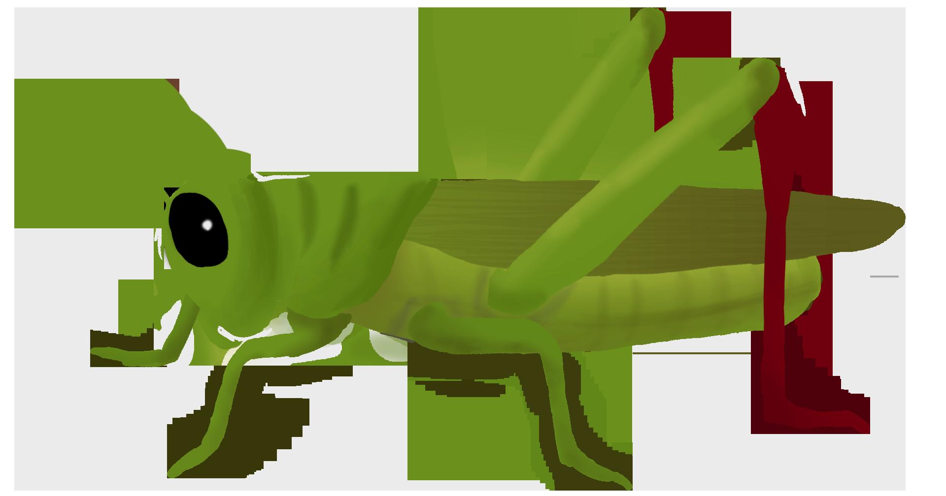 1920x1008 Grasshopper Clipart Mart