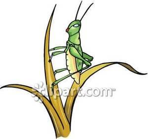 300x282 Locust Or Grasshopper On A Blade Of Grass