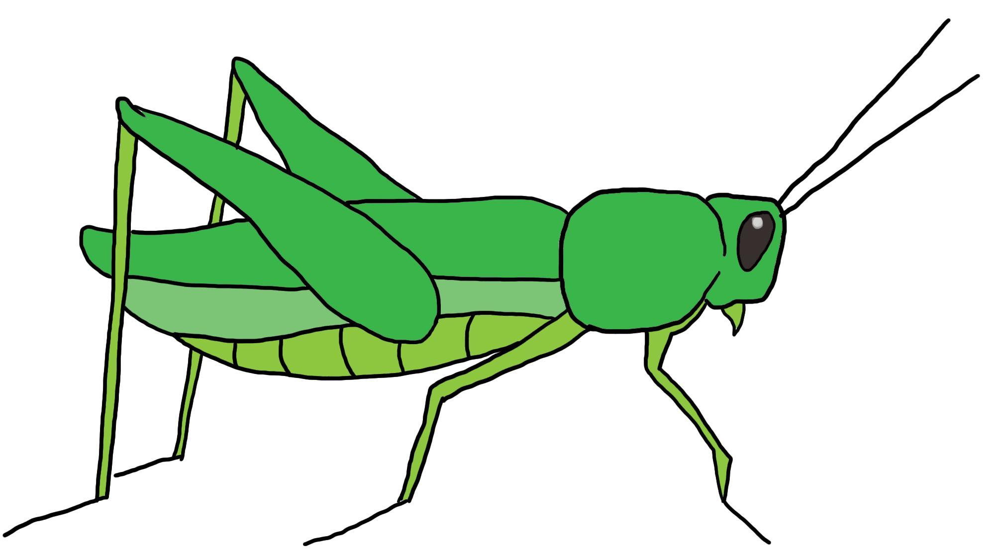 2000x1126 Unique Grasshopper Clipart Design