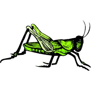300x300 Grasshopper Clip Art