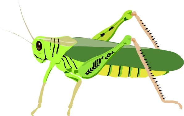 596x377 Grasshopper Locust Clip Art Free Vector In Open Office Drawing Svg