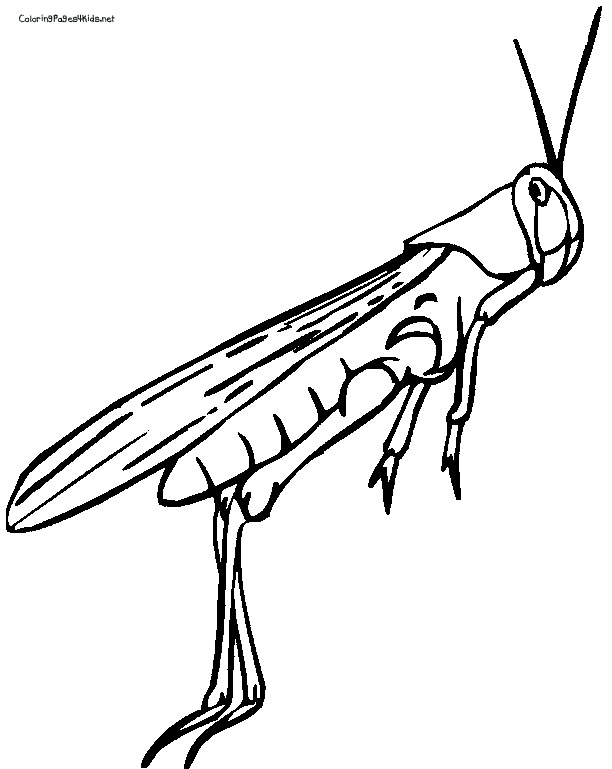 Grasshopper 612x769 Cricket Insect Coloring Page