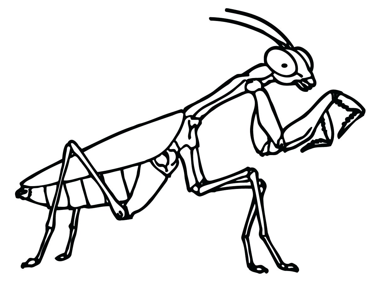 1200x900 Royalty Free Vector Download Grasshopper Coloring 118 Astonishing