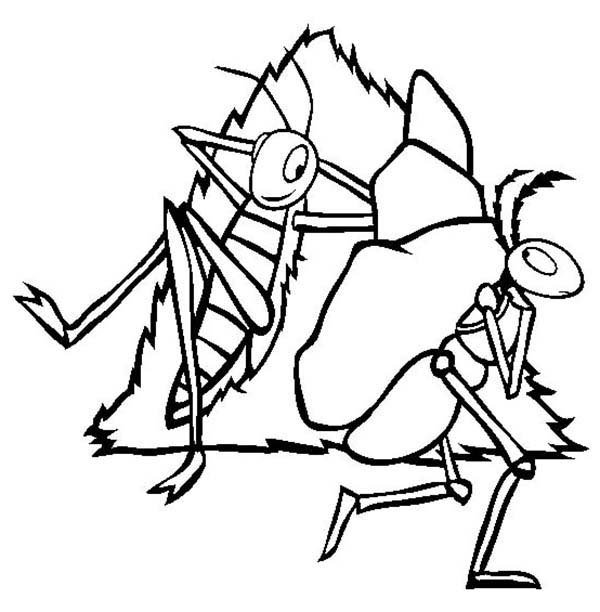 600x612 Ant Clipart Coloring Page