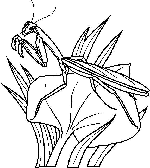 Grasshopper Drawing