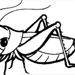 300x300 Grasshopper Coloring Page Clipart Panda