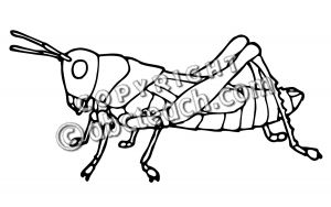 Grasshopper Drawing Outline