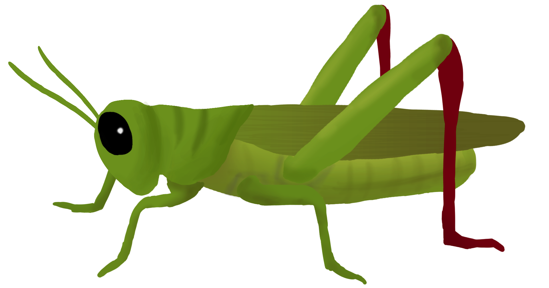 1920x1008 Grasshopper Clipart Png Amp Grasshopper Clip Art Png Images