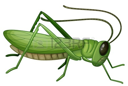 450x302 Grasshopper Images Amp Stock Pictures. Royalty Free Grasshopper