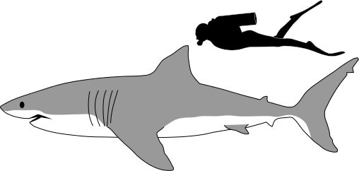 great white shark clipart free download best great white shark