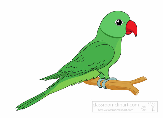 550x400 Red And Green Macaw Clipart Black And White