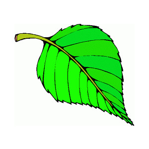 300x300 Green Leaf Clipart