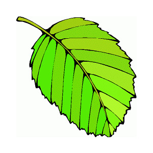300x300 Green Leaves Images Free Clipart Images 3