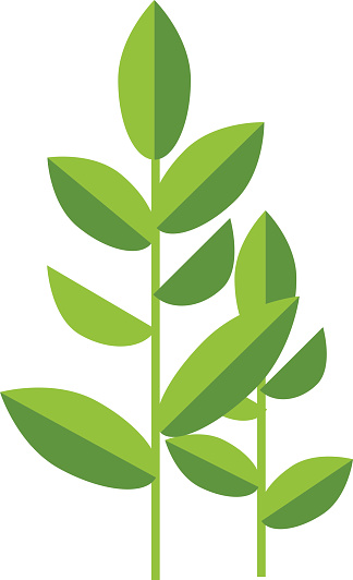 324x532 Green Tea Leaf Clipart