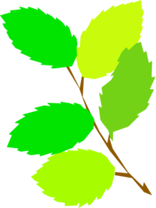 Green Leaves Clipart