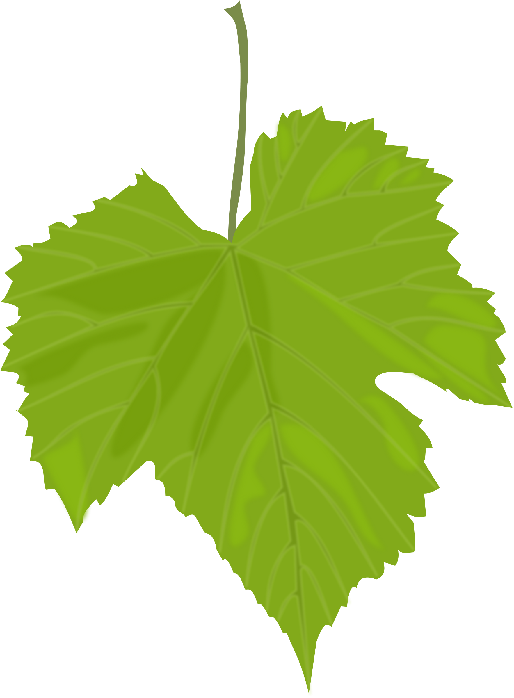 1767x2400 Green Leaves Twelve Isolated Stock Photo By