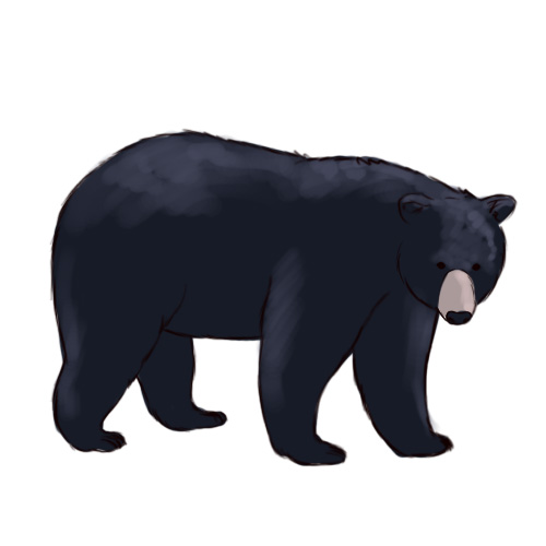 500x500 Grizzly Bear Silvertip Bear Clipart Graphics Free Clip Art 4