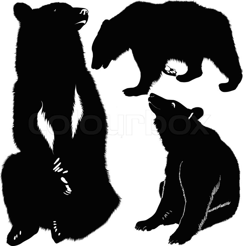 788x800 Bears White Brown Animals Stock Vector Colourbox