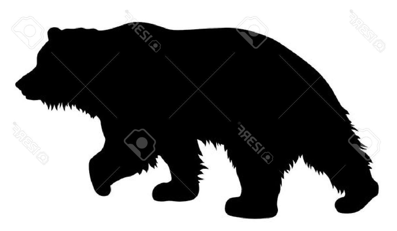1300x757 Unique Vector Illustration Of Brown Bear Silhouette Stock Grizzly