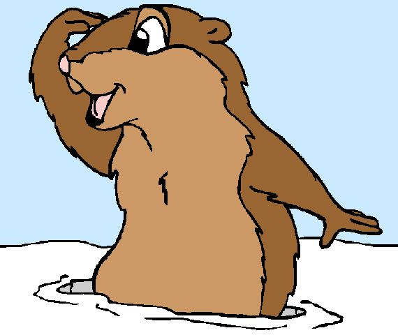 570x480 9 Best Morris The Serious Groundhog Images Animal