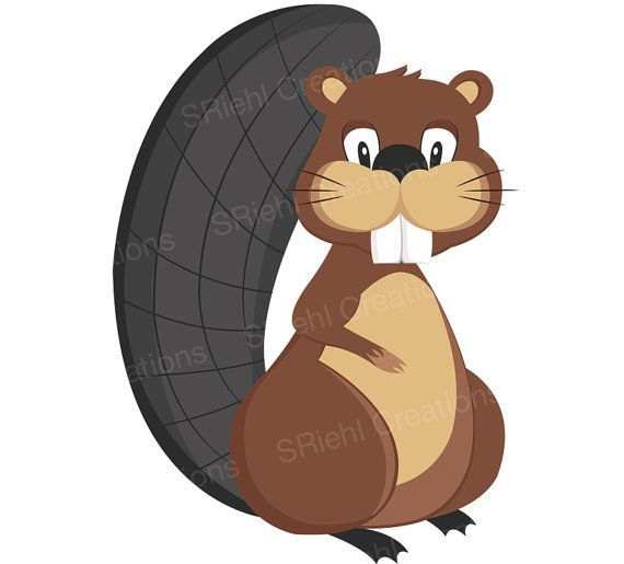 570x515 The Best Beaver Clipart Ideas Comic Font Free