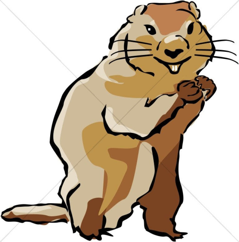 767x776 Groundhog In Color Wildlife Clipart