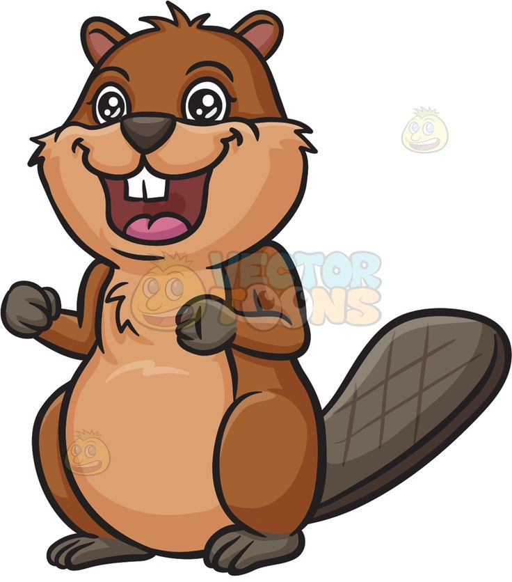 736x836 Best Beaver Cartoon Ideas Beaver Drawing, Old