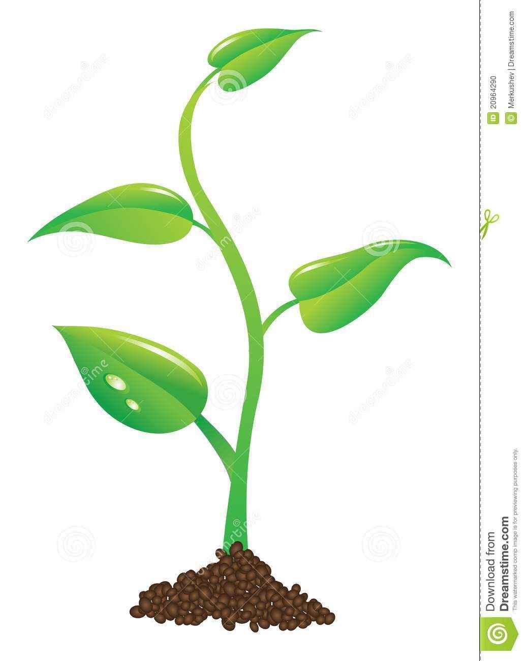 1033x1300 Growing Plant Clipart Clipart Panda Free Clipart Images, Plain