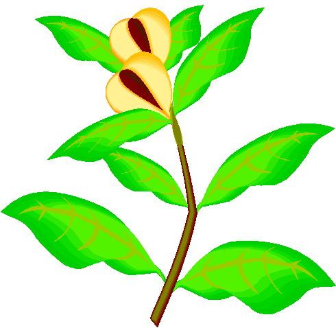 490x478 Growing Plant Clip Art Clipartfest